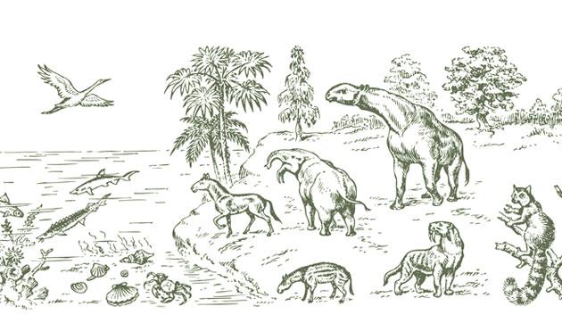 单线简笔画动物